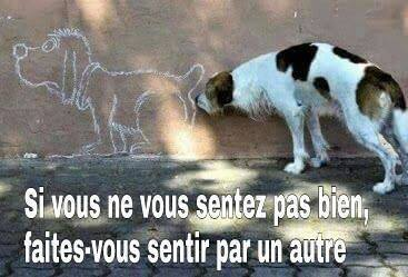 humour - Page 5 12321512