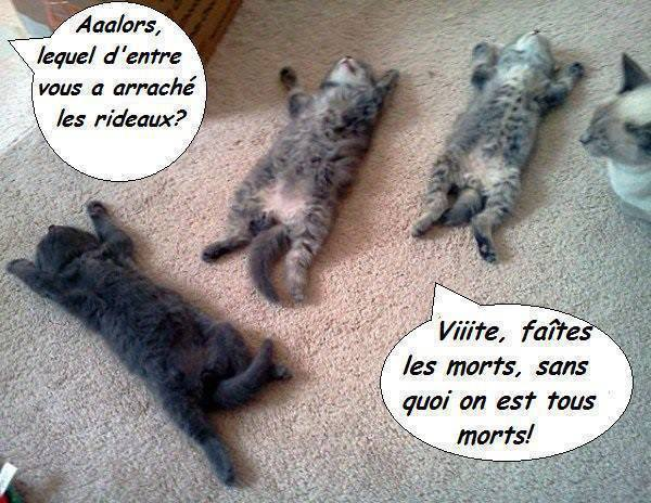 humour - Page 3 12920311