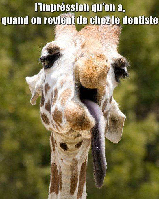 humour - Page 2 13312910