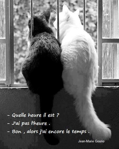 humour - Page 2 13321811