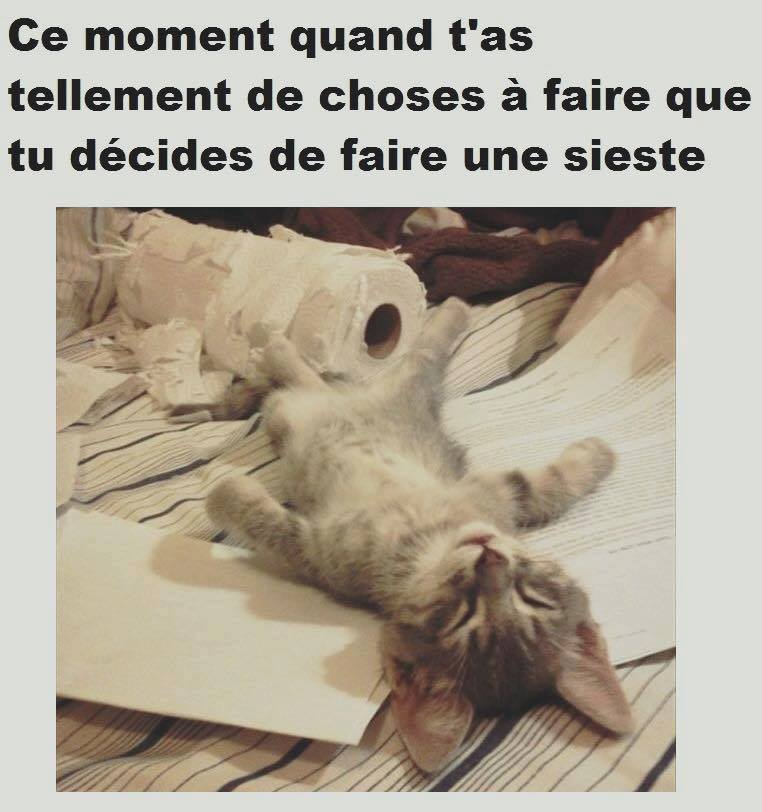 humour - Page 2 13335711