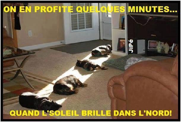 humour - Page 2 13346910