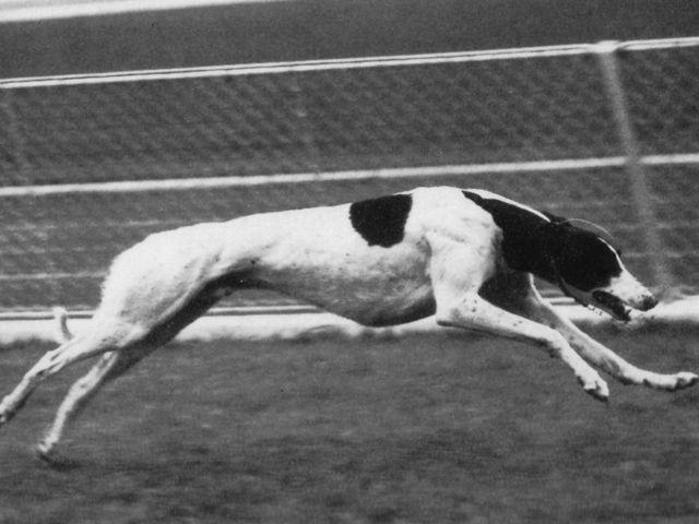 Crazy Parachute Abr 1957 Greyho15