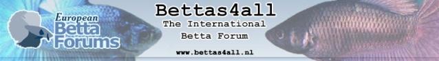 Bettas4all @ 17th Holland Koi Show: 21-23 August 2009 Site_l10