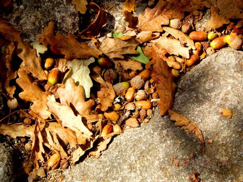 Exposição das fotografias Outono12