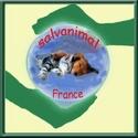 FORUM PRIVè DE L' ASSOCIATION SALVANIMAL FRANCE - Portail Logo_p15