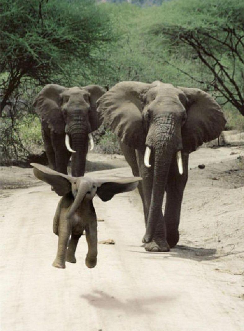 Humour en images Dumbo10