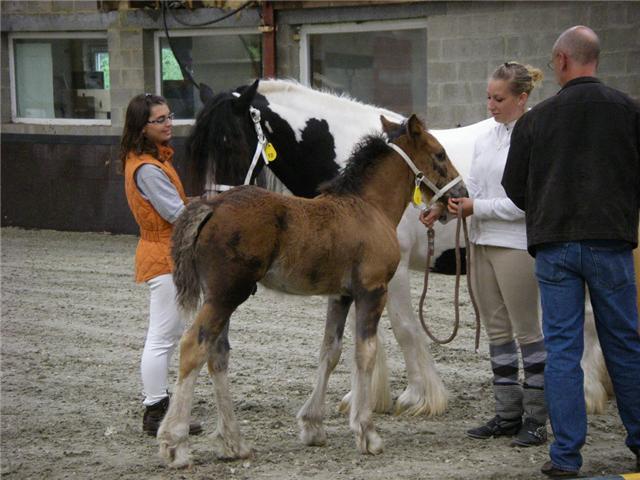 Gypsyranch en Ardennes Belgique Valley38