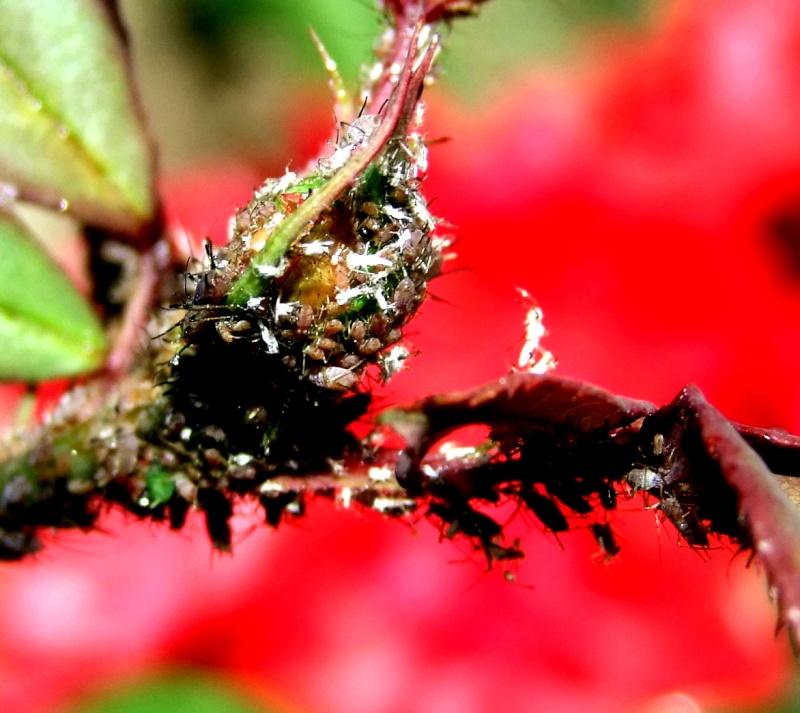 Insectopia Dscf2912