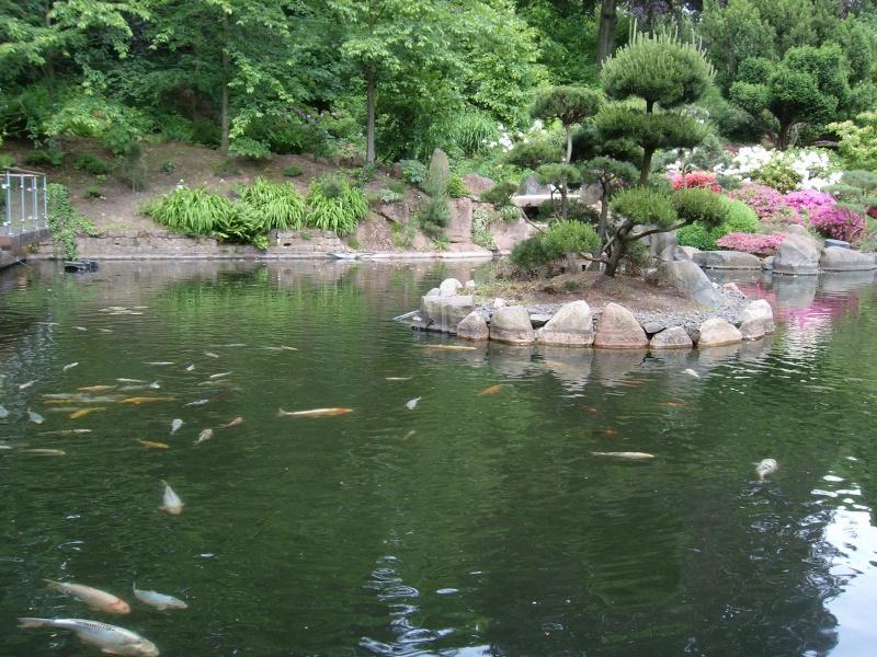Jardins japonais 100b2610