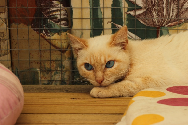 SNOWBELL Img_9113