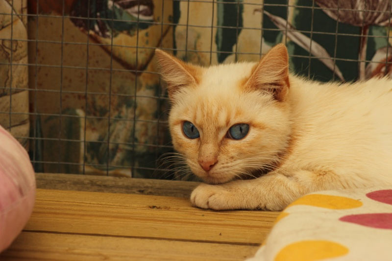 SNOWBELL Img_9114