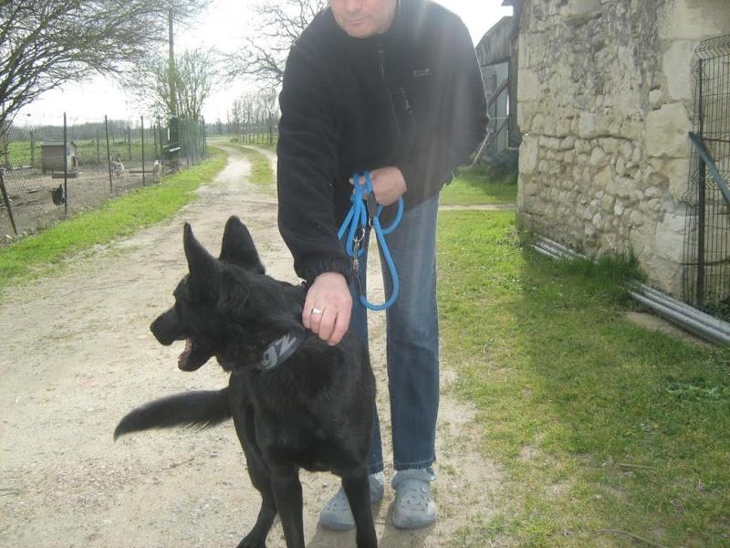 BRUCE, mâle berger noir, né début 2013 Bruce10