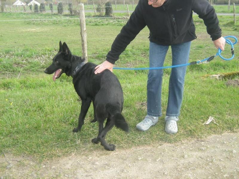 BRUCE, mâle berger noir, né début 2013 Bruce110