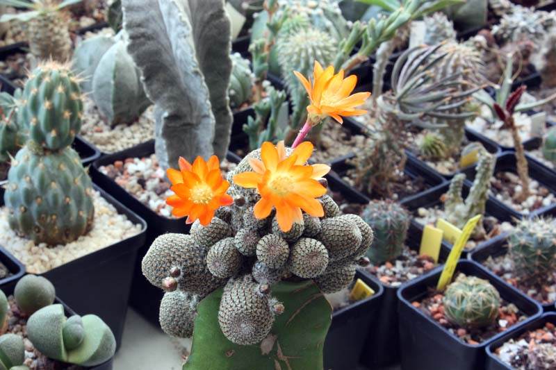 Floraison du jour Img_4715