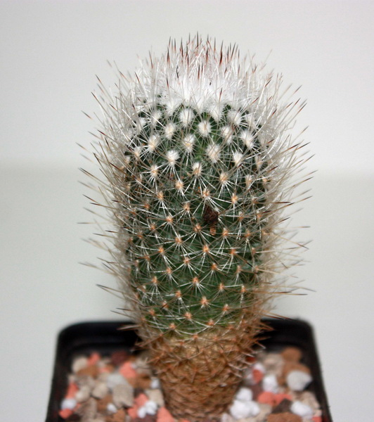 Identification Img_4719