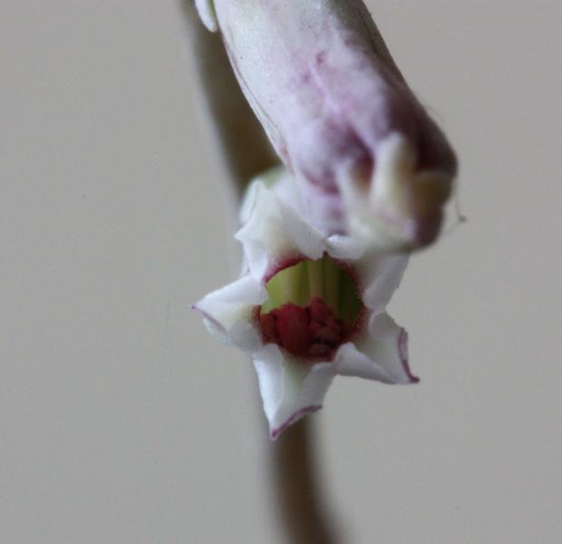 Floraison du jour Img_4816