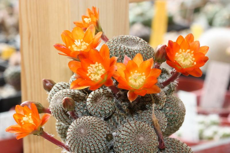 Floraison du jour Img_5465