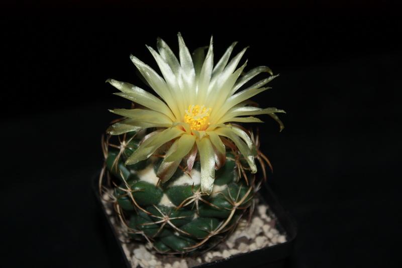 Floraison du jour Img_5468