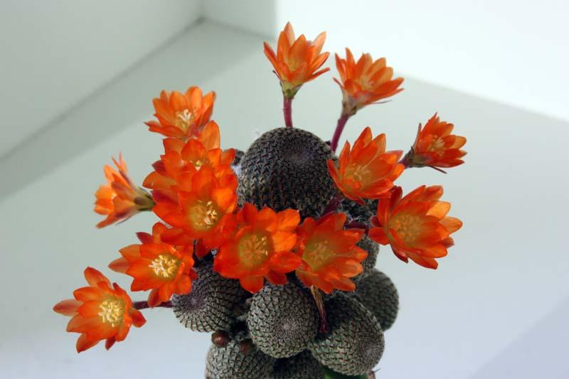 Floraison du jour Img_5528