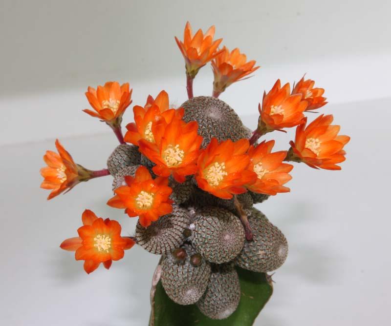 Floraison du jour Img_5529
