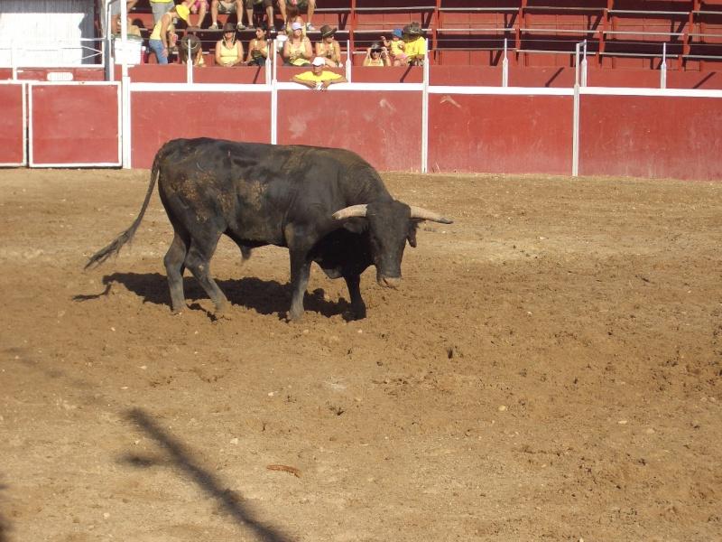 Fotos y mas fotos  todo toros Canari61
