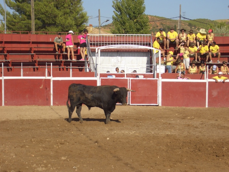 Fotos y mas fotos  todo toros Canari62