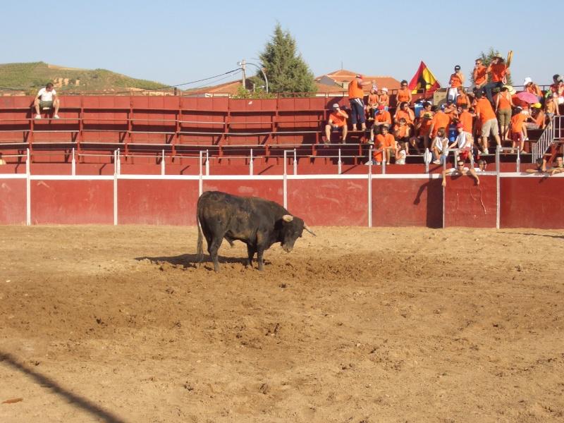 Fotos y mas fotos  todo toros Canari63