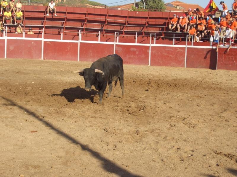 Fotos y mas fotos  todo toros Canari64
