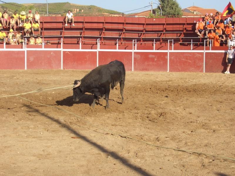 Fotos y mas fotos  todo toros Canari65