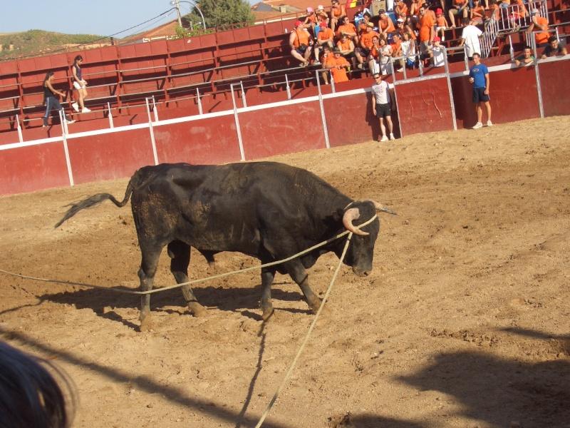 Fotos y mas fotos  todo toros Canari66