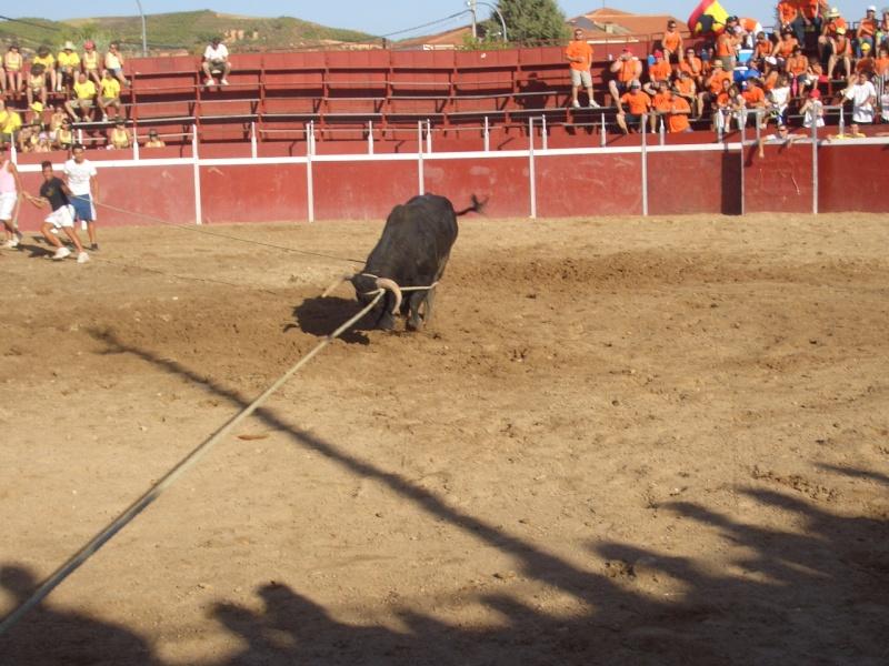 Fotos y mas fotos  todo toros Canari67