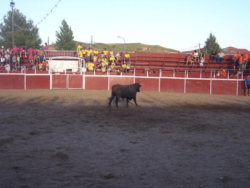 Fotos y mas fotos  todo toros Canari69