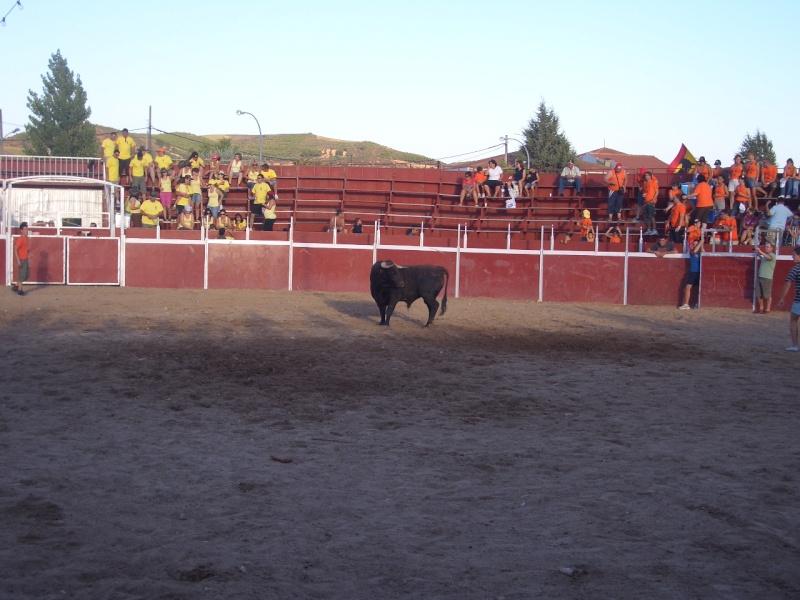 Fotos y mas fotos  todo toros Canari70