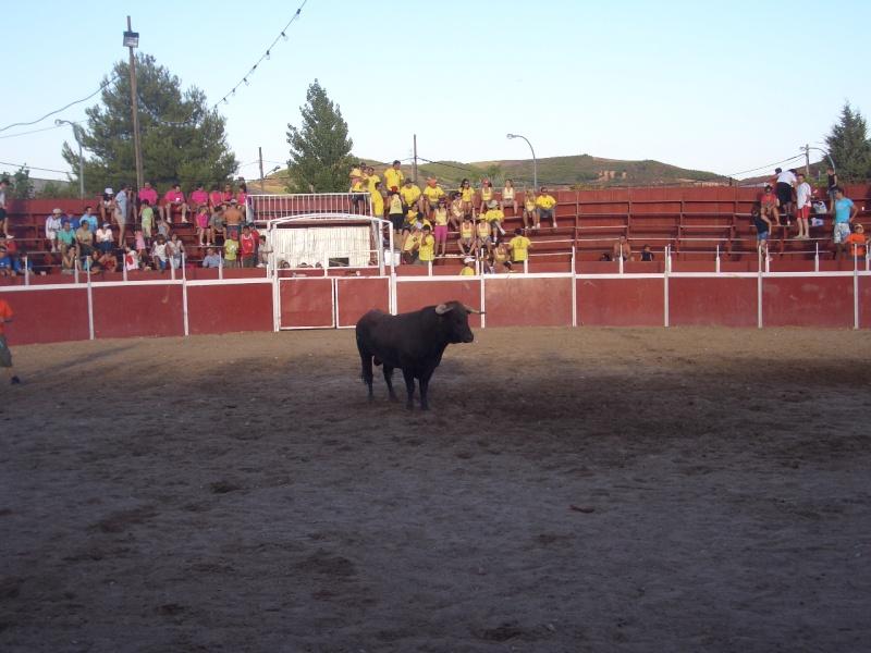 Fotos y mas fotos  todo toros Canari71