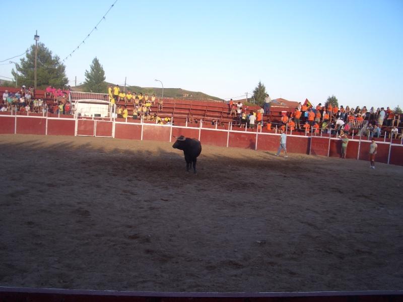 Fotos y mas fotos  todo toros Canari72