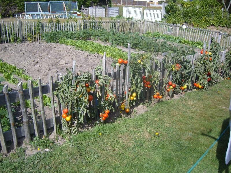 toujours des tomates ! Fleurs24