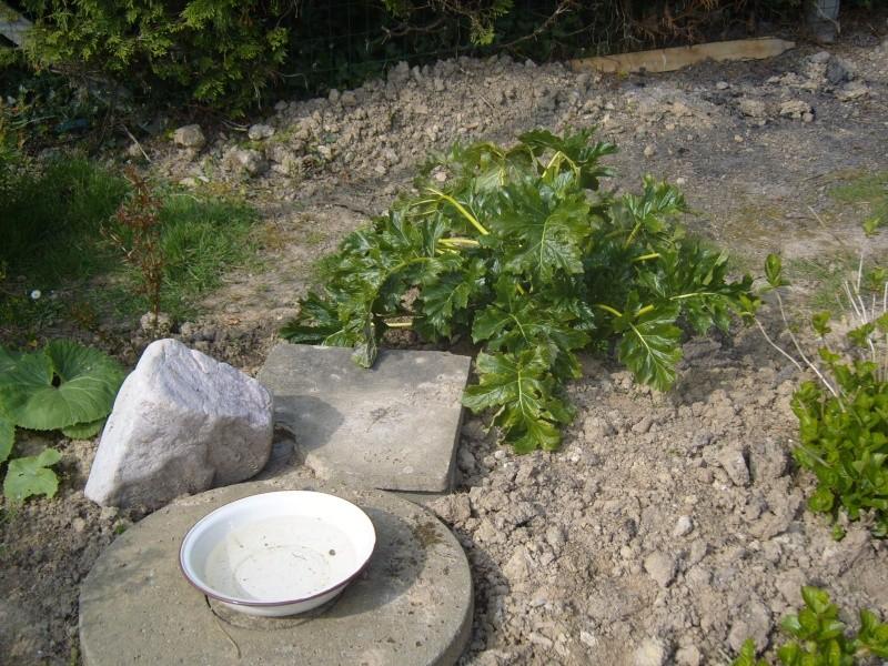 pour les rocailles ou bordures Jardin11