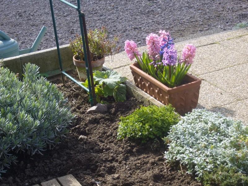 Quelques fleurs de mon jardin c'est le printemps Robe_e13