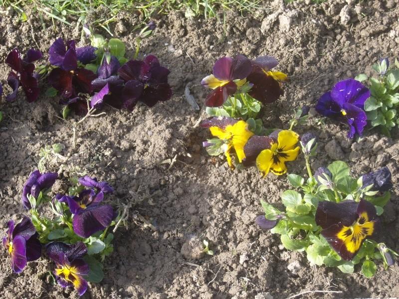 Quelques fleurs de mon jardin c'est le printemps Robe_e14