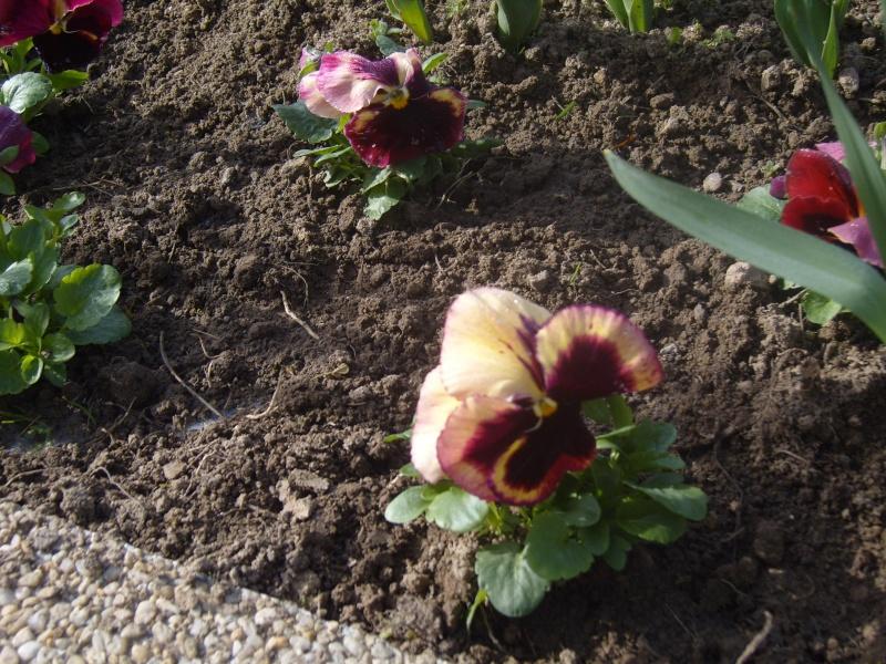Quelques fleurs de mon jardin c'est le printemps Robe_e15
