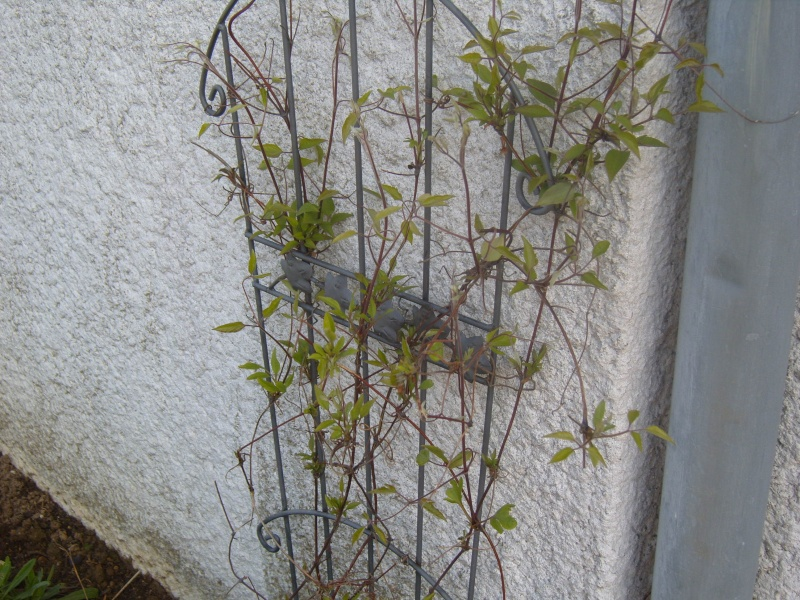 Quelques fleurs de mon jardin c'est le printemps Robe_e16