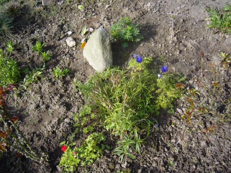 Quelques fleurs de mon jardin c'est le printemps Robe_e17