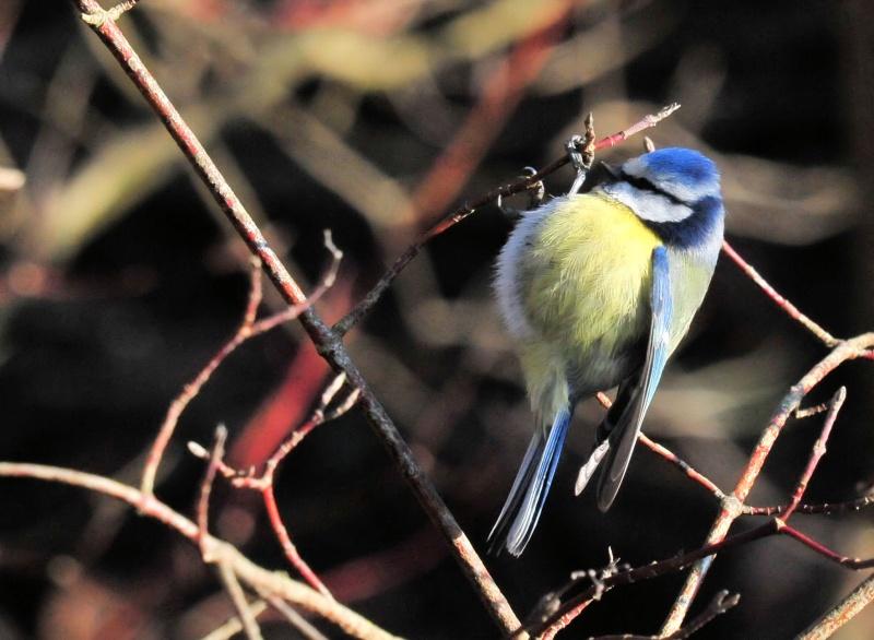 mon abc des oiseaux - Page 4 108_my10