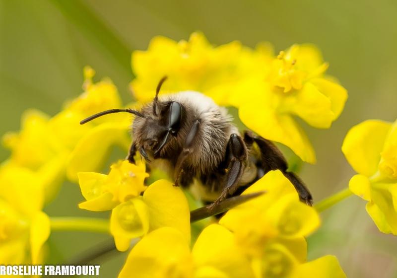 abeille se cachant du froid Dsc_7610