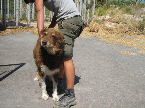Perro de Terra Natura Rundy10