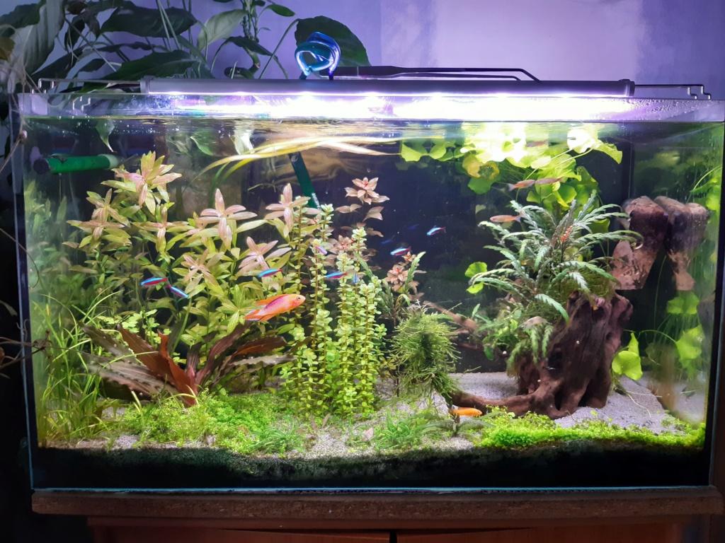 Aquarium Cynthia89190 20200516