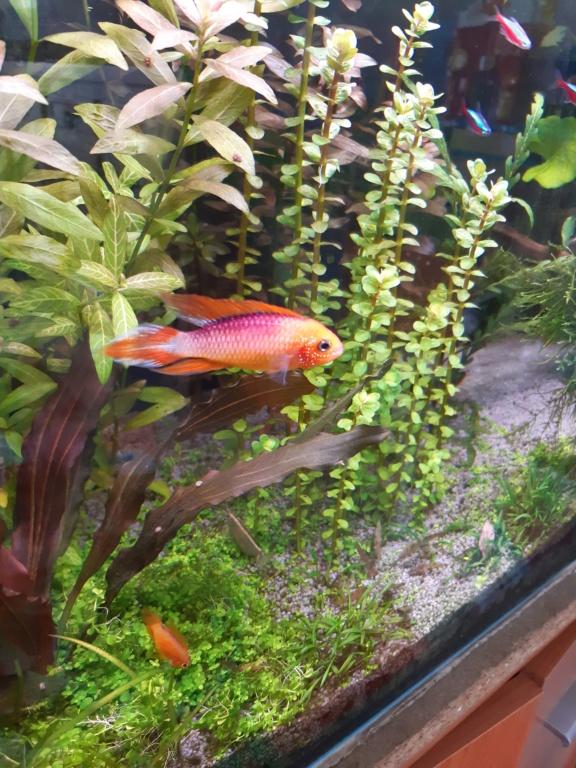 Aquarium Cynthia89190 20200520