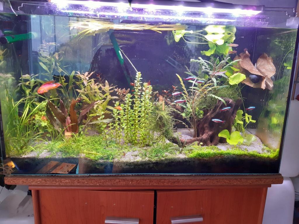 Aquarium Cynthia89190 20200525