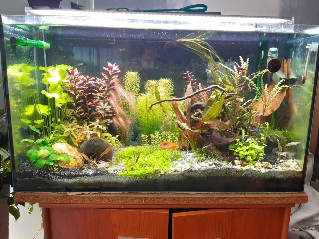 Aquarium Cynthia89190 20200710